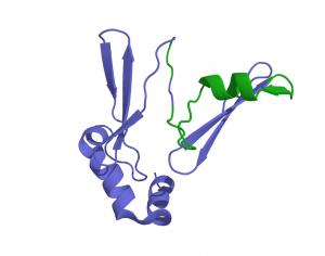Preproghreline - hormone responsable de l'appétit